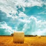 farmers-field