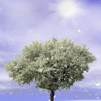 Fondo para Samsung Spring Trees