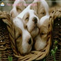 Tema animal puppies52