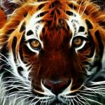 Tema Tiger