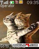 tema Titanic Cats-Gracioso