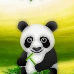 tema panda