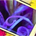 ProScope Micro Mobile