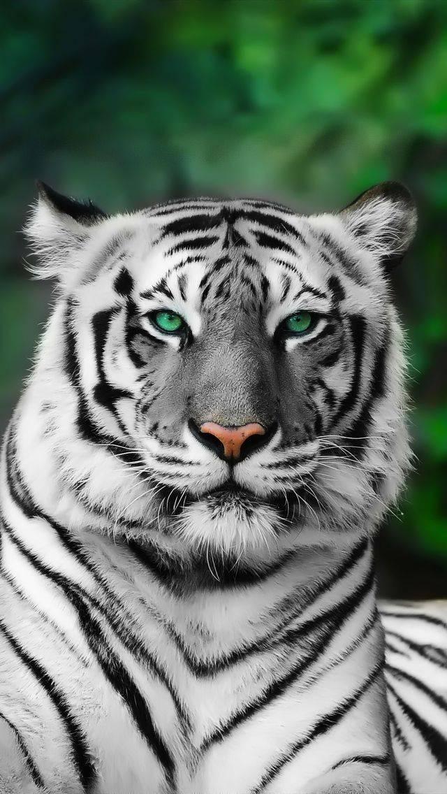 Жёлтый глаз тигра сезон 1 (2018) смотреть онлайн или скачать.